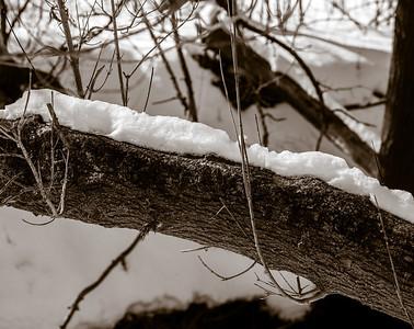 2013-02-13_Pomona_Park_27