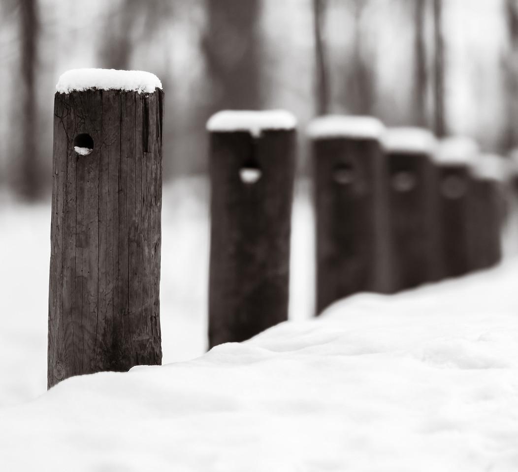 2013-02-24_Humber_Arboretum_31
