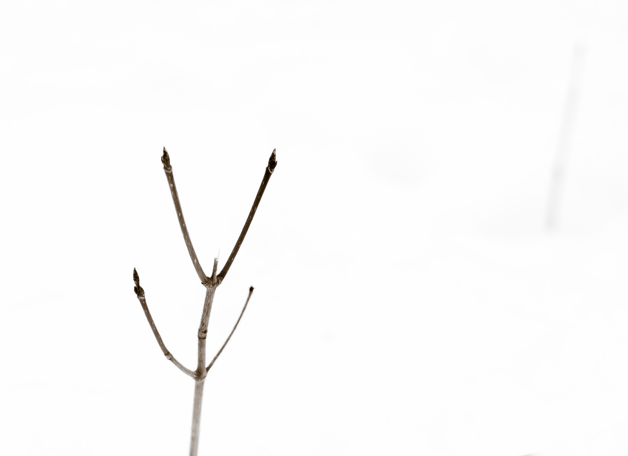 2013-03-06_Thornhill_Woods_08