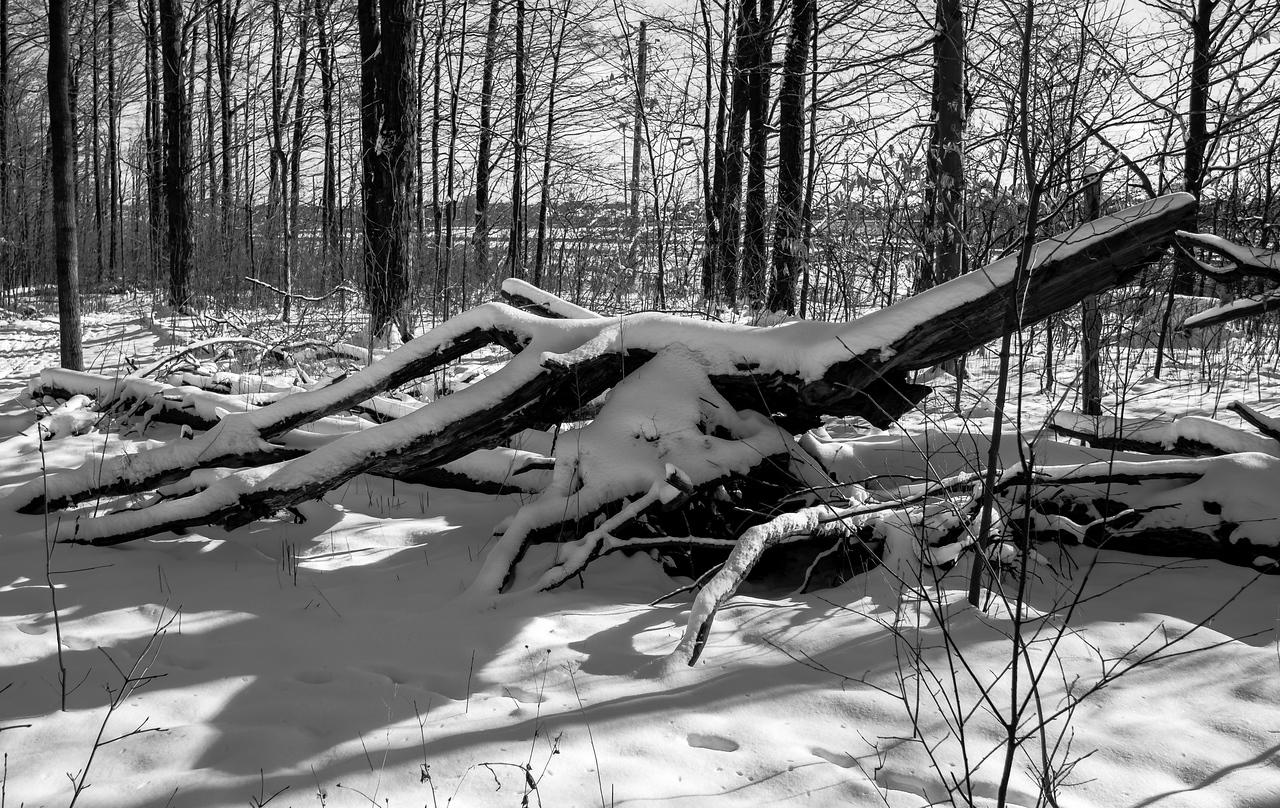 2012-12-30_Thornhill_Woods_Park_10