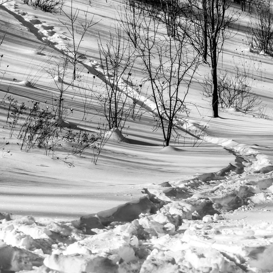 2013-02-09_Pomona_Park_06