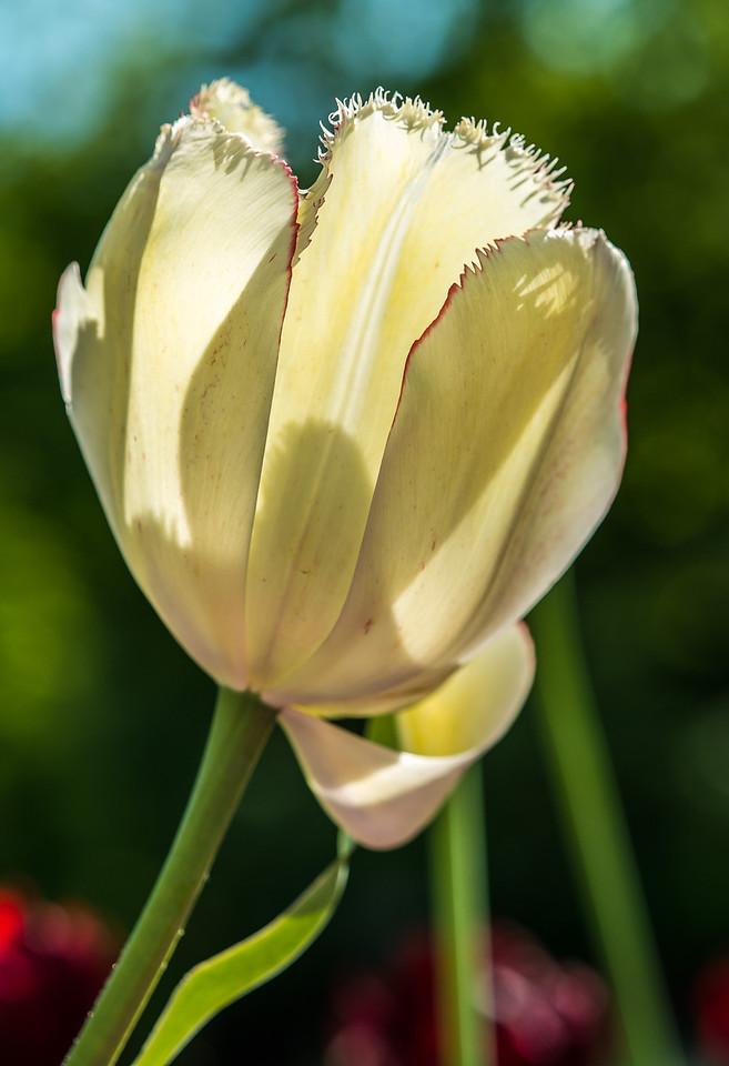 2013-05-27_Edward_Gardens_02