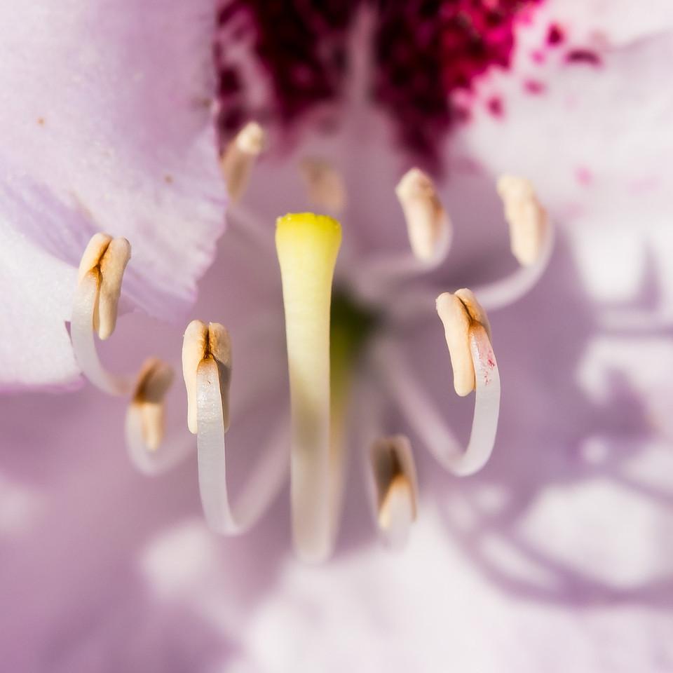 2013-06-03_Edward_Gardens_01