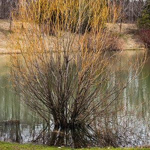 2013-04-15_Sagecrest_Pond_01