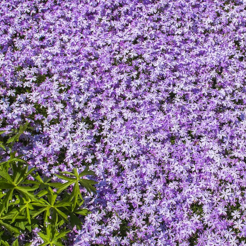 2013-05-19_Edward_Gardens_07