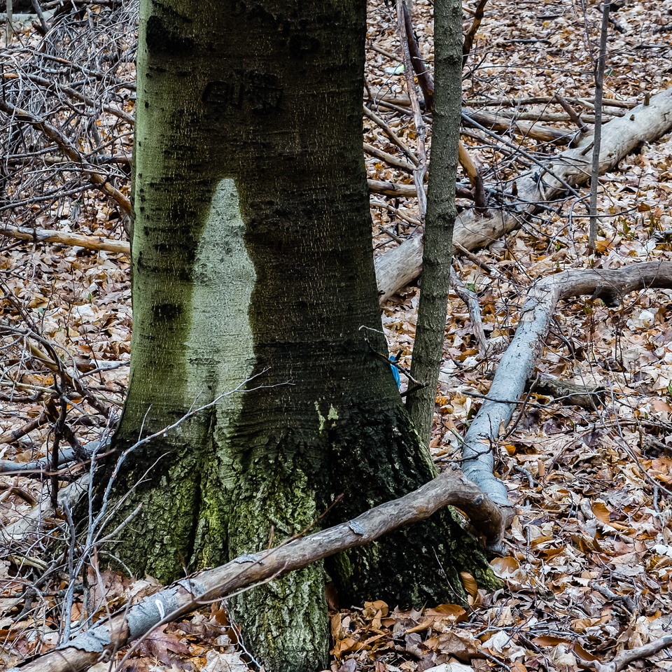 2013-04-16_X20_Thornhill_Woods_Park_2
