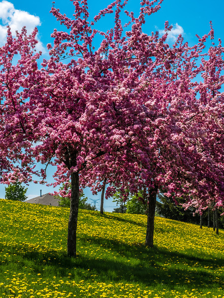 2013-05-15_Pink_And_Yellow_5