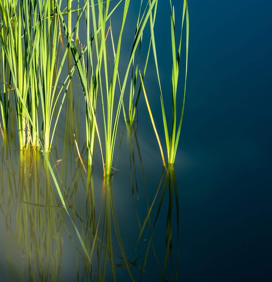 2013-06-12_Sagecrest_Pond_03