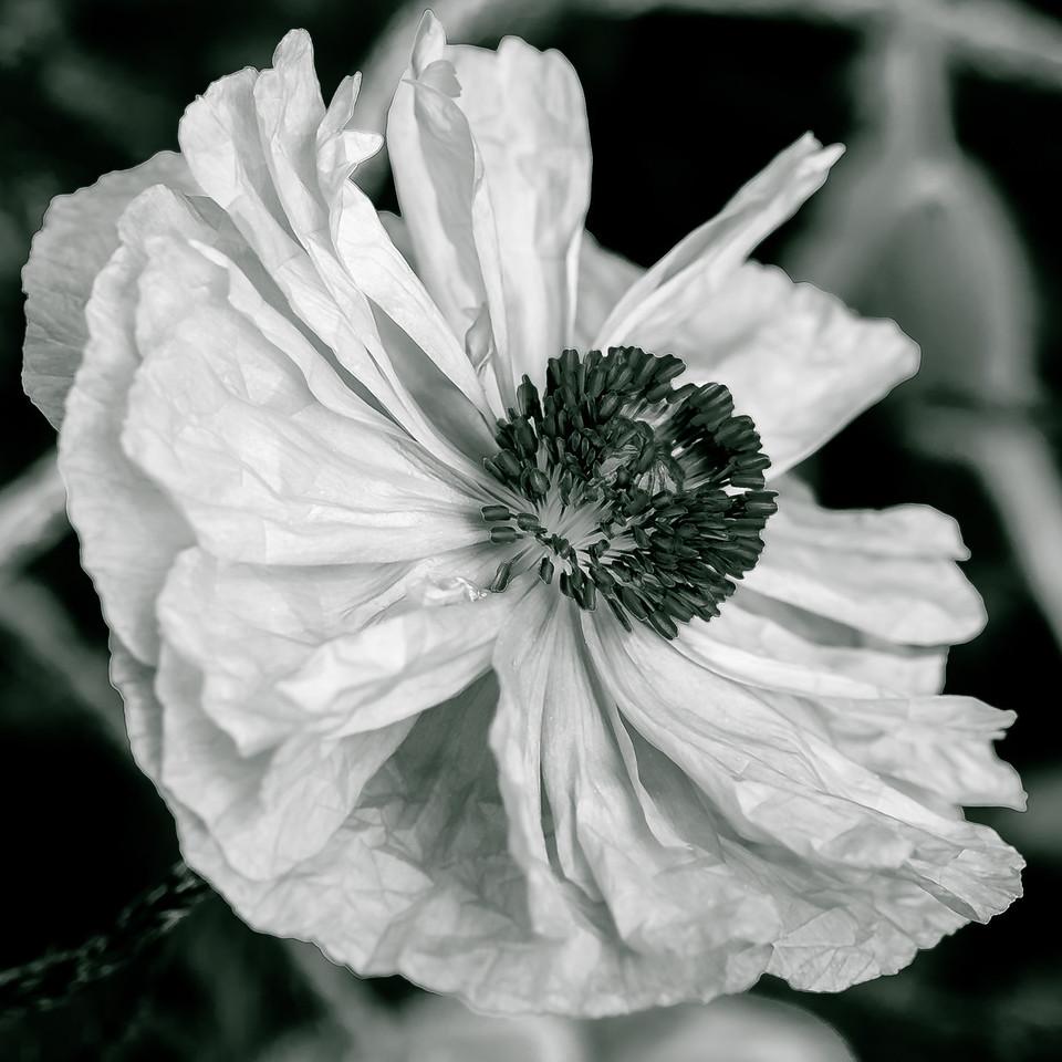 2013-06-03_Edward_Gardens_20