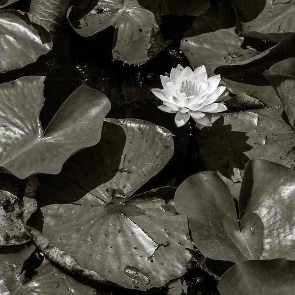 2013-08-04_Brickworks_02