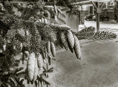 2013-07-25_Pine_Combs_12