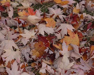 Fall 041