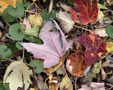 Fall 036