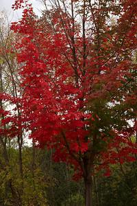 Pomona Park 5 October  - 08