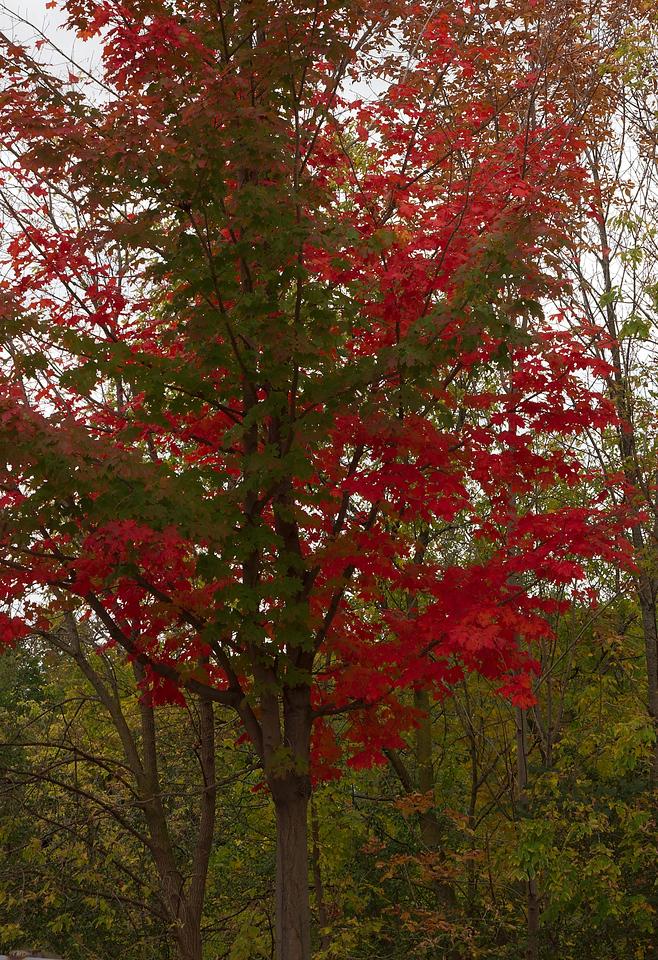 Pomona Park 5 October  - 07