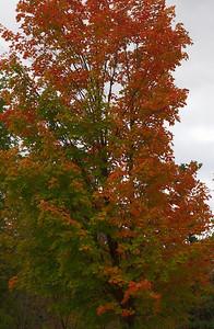 Pomona Park 5 October  - 09