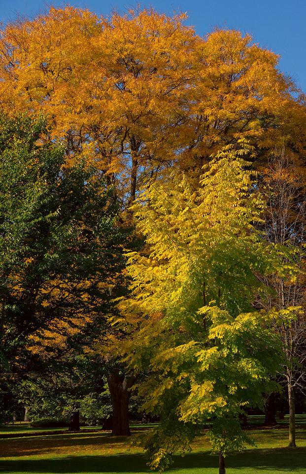 Edward Gardens Late October - 21