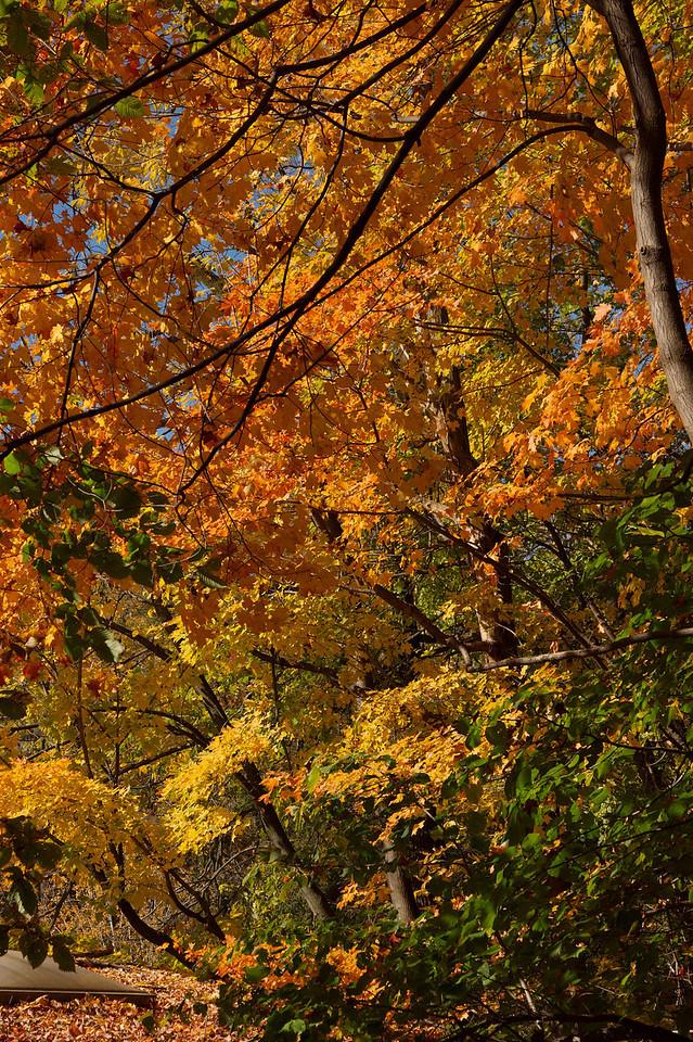 Edward Gardens Late October - 13