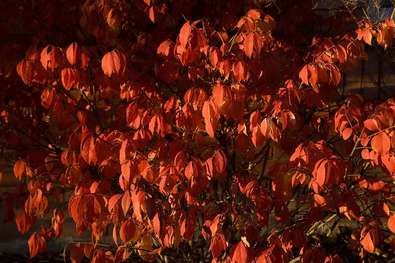 Home Early November - 12