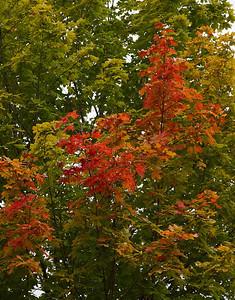 Pomona Park 5 October  - 11