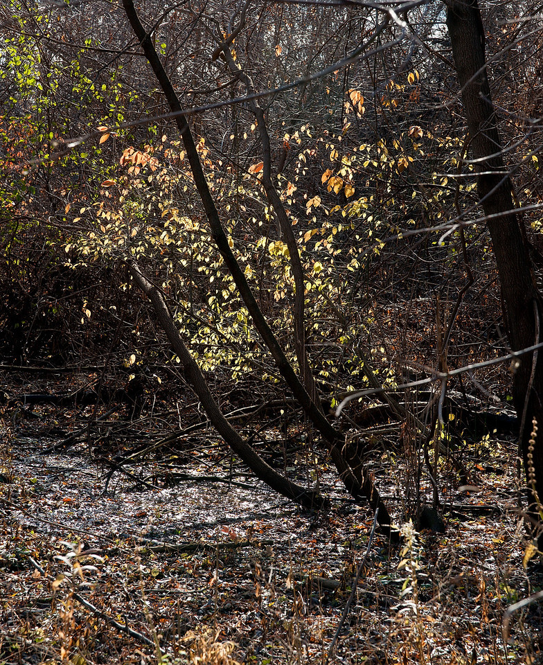 Pomona Park Mid November - 14
