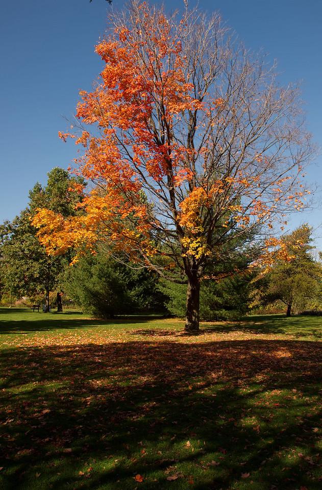 Edward Gardens Late October - 27