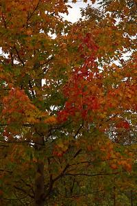 Pomona Park 5 October  - 05
