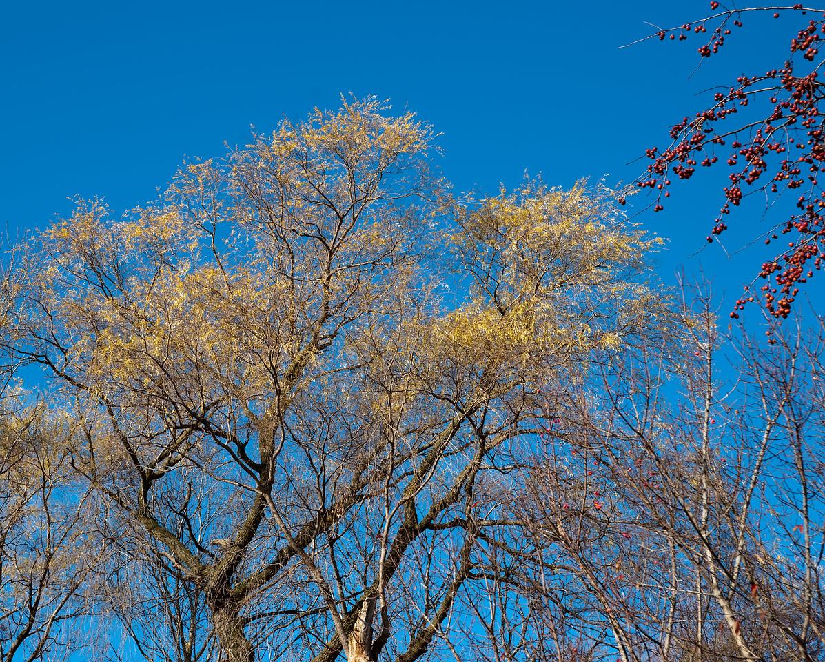 Pomona Park Mid November - 09