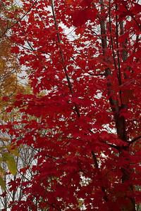 Pomona Park 5 October  - 16