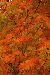 Pomona Park 5 October  - 34