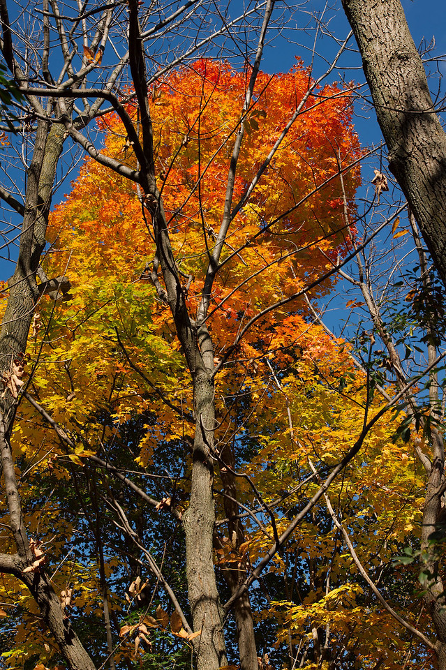 Edward Gardens Late October - 32