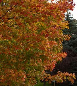 Pomona Park 5 October  - 36