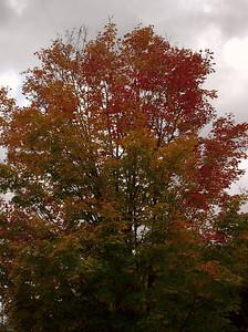Pomona Park 5 October  - 01