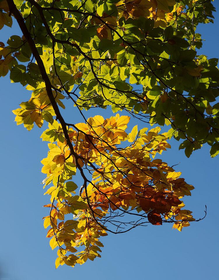 Edward Gardens Late October - 34