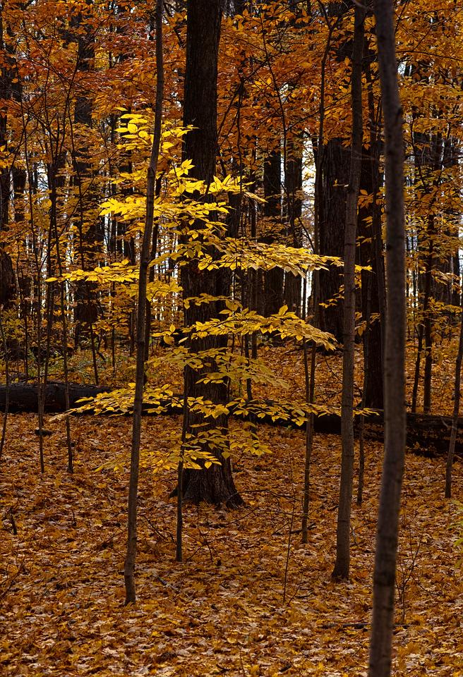 Thornhill Woods 1 November - 14