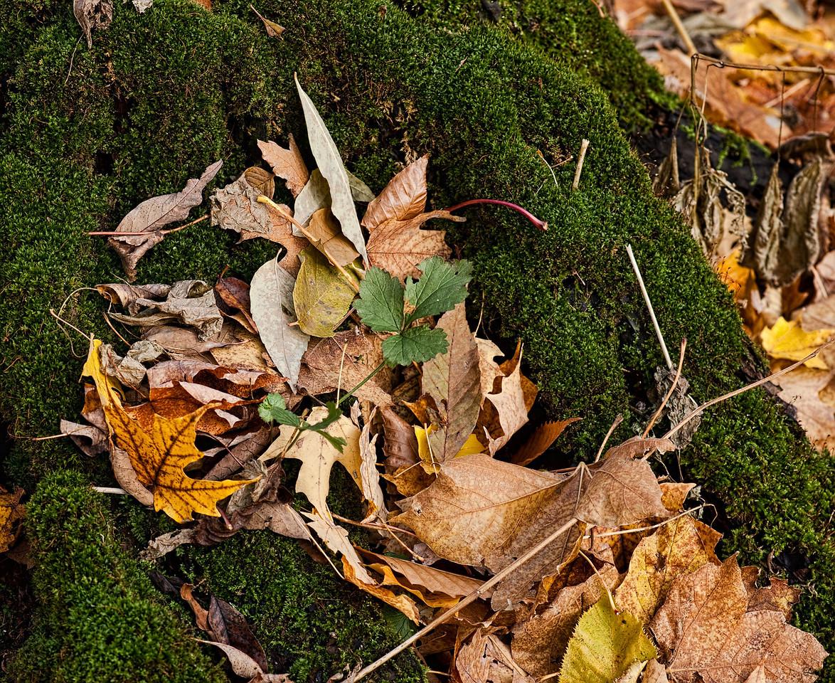 Thornhill Woods 1 November - 17