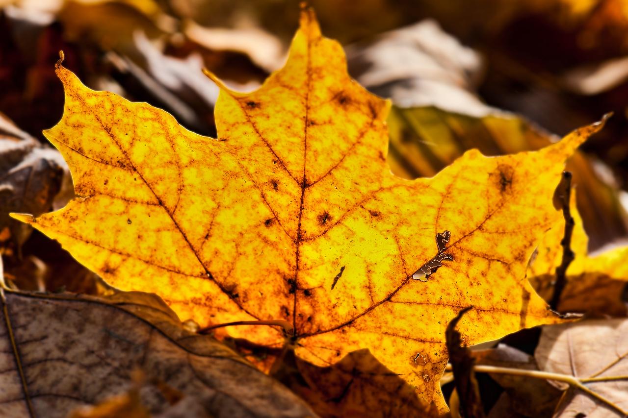Thornhill Woods 1 November - 21