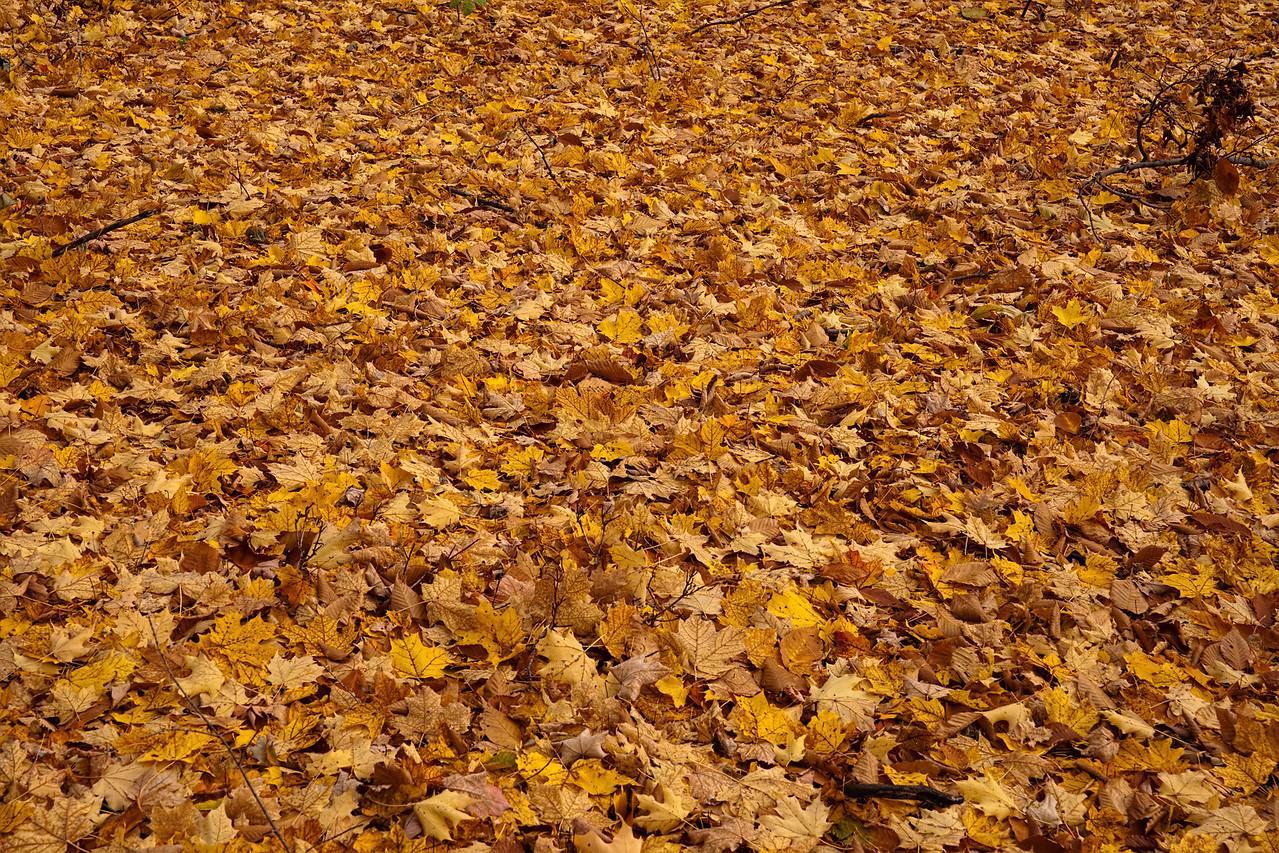 Thornhill Woods 1 November - 01