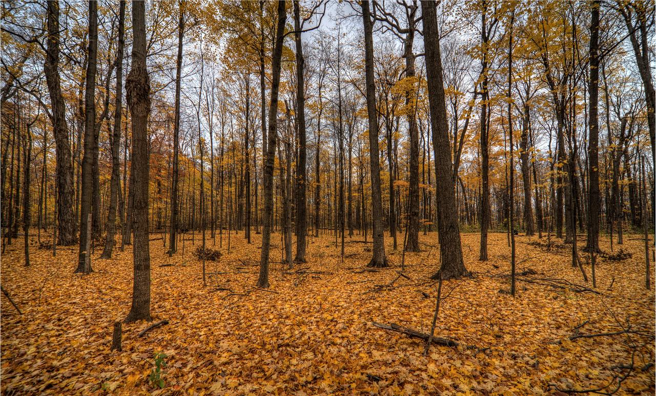 Thornhill Woods 1 November - 04