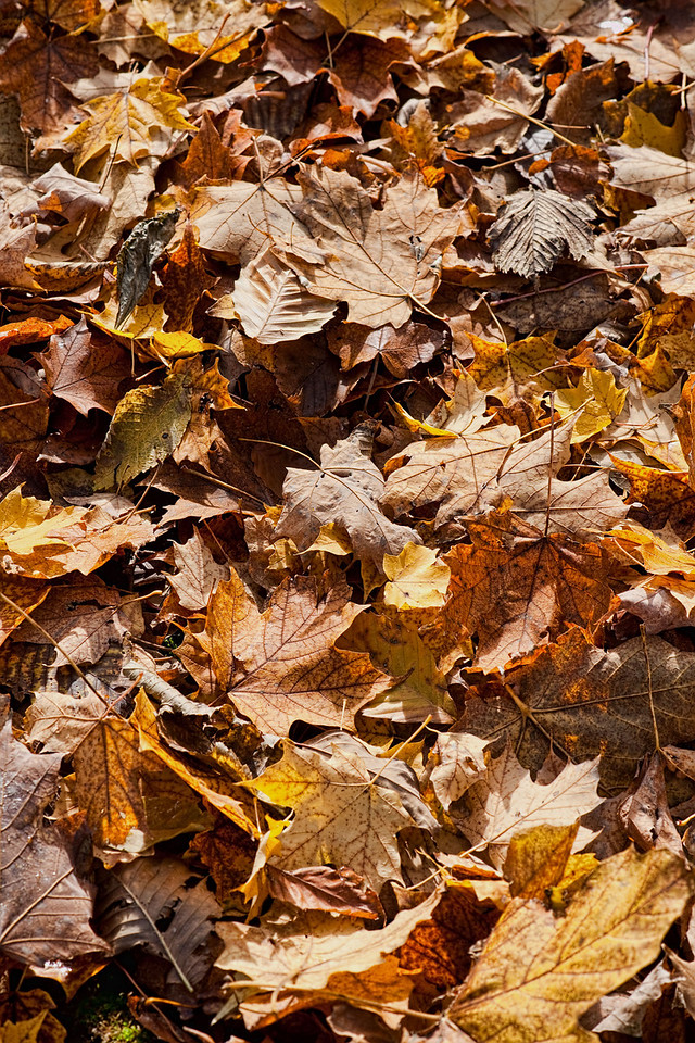 Thornhill Woods 1 November - 18