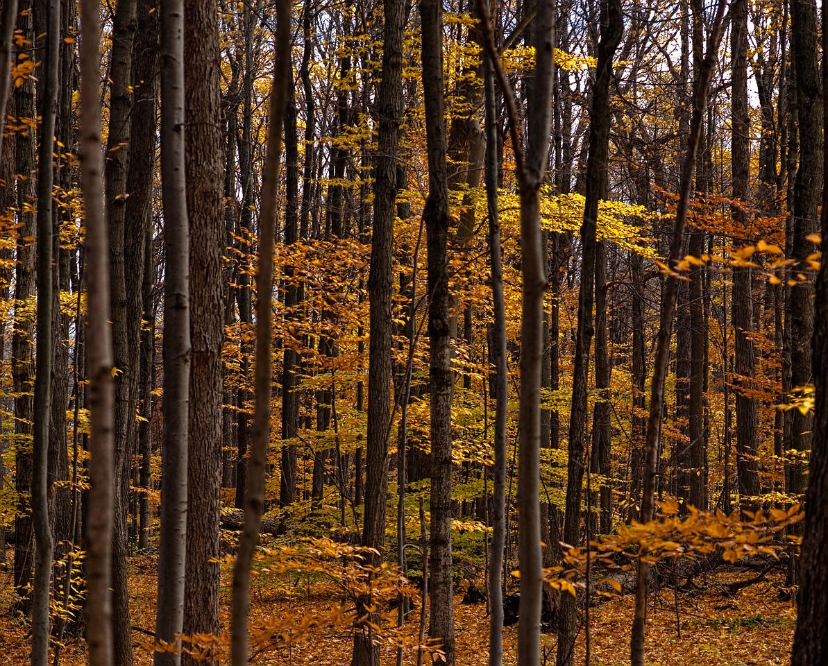 Thornhill Woods 1 November - 15