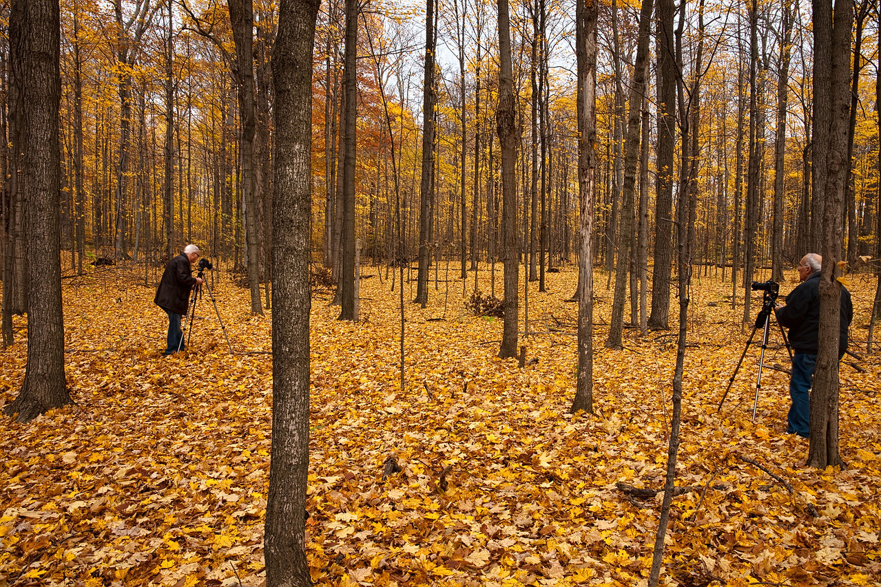 Thornhill Woods 1 November - 03