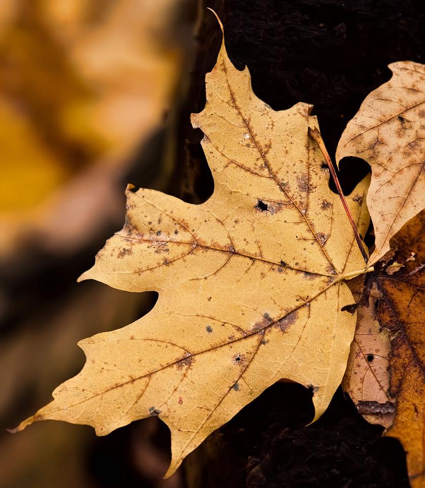 Thornhill Woods 1 November - 08