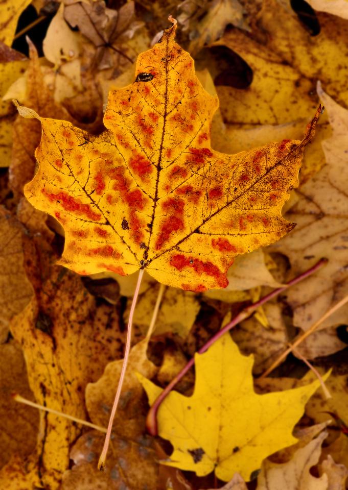 Thornhill Woods 1 November - 28