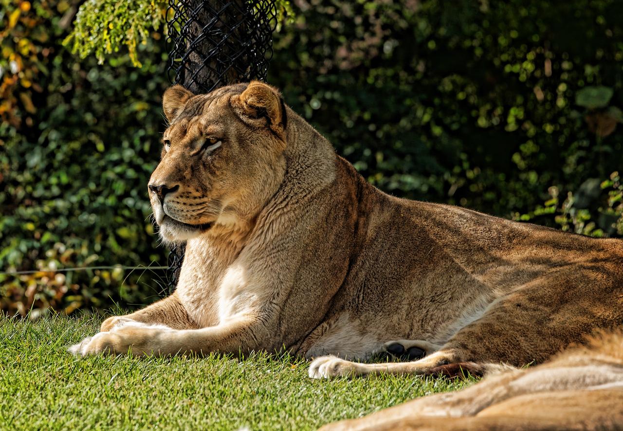 2010-09-20 - Toronto Zoo - 22