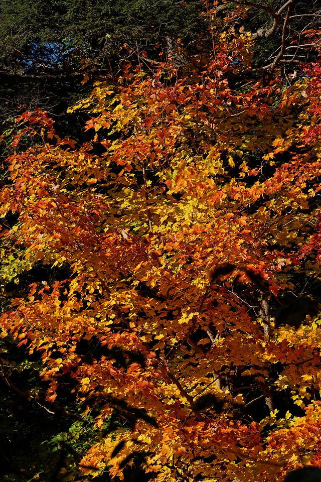 2010-10-10 - Edward Gardens - 58
