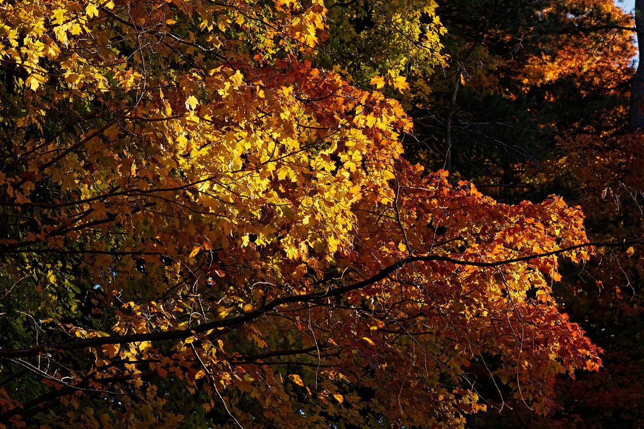 2010-10-10 - Edward Gardens - 47