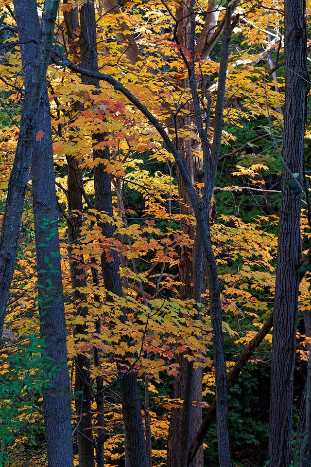 2010-10-10 - Edward Gardens - 53