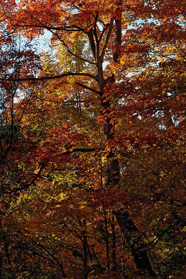 2010-10-10 - Edward Gardens - 39