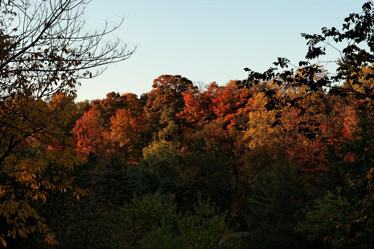 2010-10-10 - Edward Gardens - 07